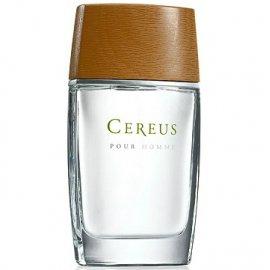 Cereus № 4 4313 фото